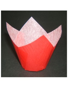 Tulipcup 175/50 Rouge